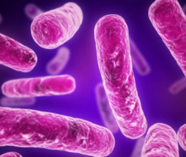микробы   обструктивного бронхита